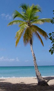 palmeMartinique_web